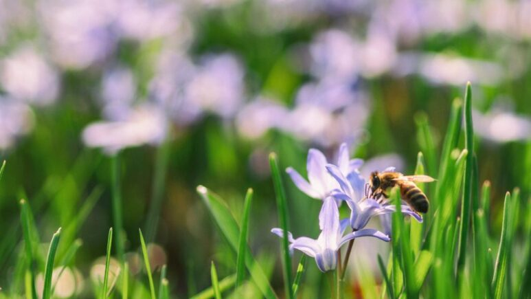 bumblebee perched on flower in spring